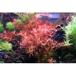 Reaktor / dyfuzor zewnętrzny UPD519 12L 12/16mm