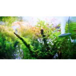 Aqua-art Aqua Substrate II+ 1,8kg Powder - drobne czarne podłoże