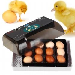 Komodo Jelly Pot Fruit Mix  Jar - miks owocowy w żelu 60szt.