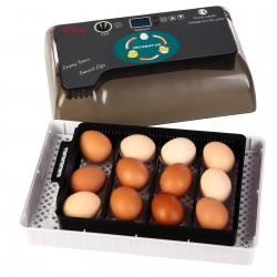 Komodo Jelly Pot Mango - pokarm mango w żelu
