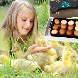 Komodo Jelly Pot Mango Jar - pokarm mango w żelu 60szt.