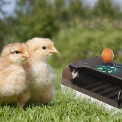 Komodo Jelly Pot Melon Jar - pokarm melon w żelu 60szt.