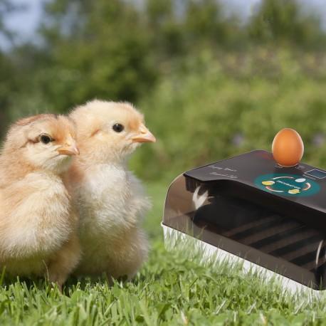 Komodo Jelly Pot Melon Jar - pokarm melon w żelu 60szt.