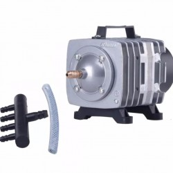 Eco Plant - Bacopa Myriophylloides - InVitro duży kubek