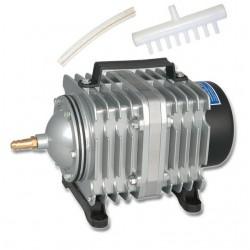 Eco Plant - Gratiola Viscidula - InVitro duży kubek