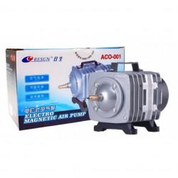 Eco Plant - Rotala Rotundifolia - InVitro duży kubek