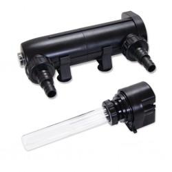 Eco Plant - Crassula Helmsii - InVitro duży kubek
