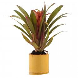 Repti-Zoo Max Lamp - lampa na żarówkę grzewczą i UVB do 100W