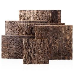 Bello Plant - Zebra White Star - roślina XL do obrazów 3D